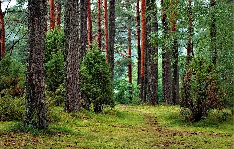 Im Wald laufen ist für mich eines der angenehmsten Aktivitäten, da ich hier abschalten kann und den weichen Untergrund genieße